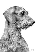 Wirehaired Dachshund Dog Art